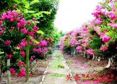 青岛市公布首批开放苗圃 市民可免费观赏