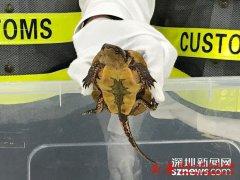 冰皮月饼袋里全是龟!皇