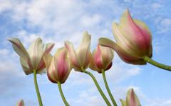 每一朵鲜花都朝太阳奔跑