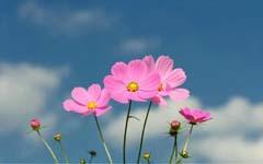 没有一朵不受伤的花