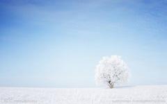 开在冬天里的白棉花