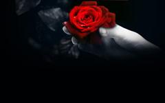 非凡的玫瑰之爱
