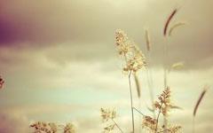 野草们的春天