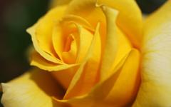http://www.zjzhongshang.com/uploads/allimg/190314/1_03141310232020.jpg