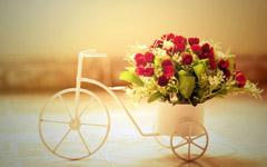 受伤的玫瑰,夜莺陪你美丽轮回_感动爱情